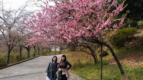 桃山プロジェクト 北堀公園のヤグチ桃