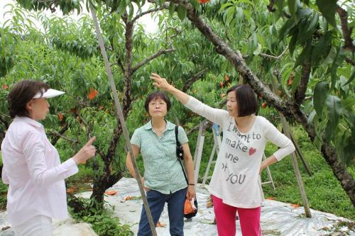 桃山プロジェクト 日野の桃畑見学