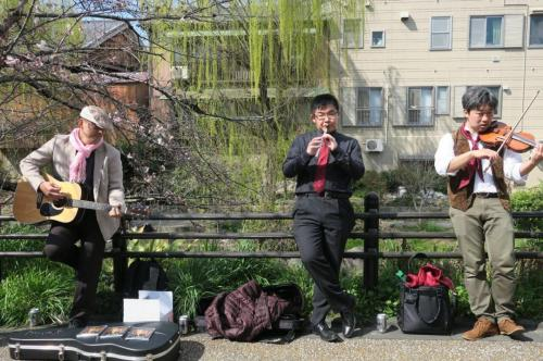 南浜桜まつり 桃山語り部の道